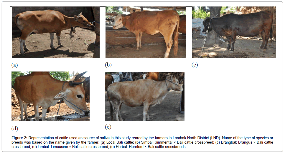 veterinary-science-technology-Representation-cattle