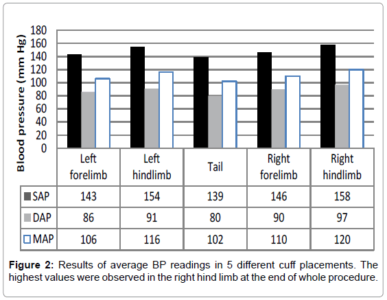 Effect of Cuff Placement on Blood Pressure Measurement in