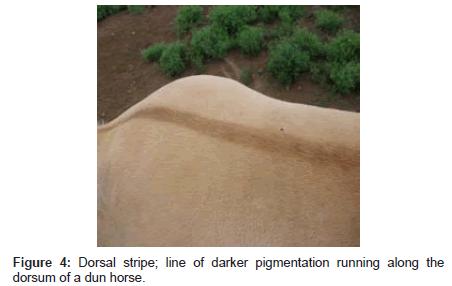 veterinary-science-technology-darker-pigmentation