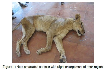 veterinary-science-technology-emaciated-carcass