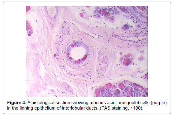 veterinary-science-technology-histological-goblet-epithelium