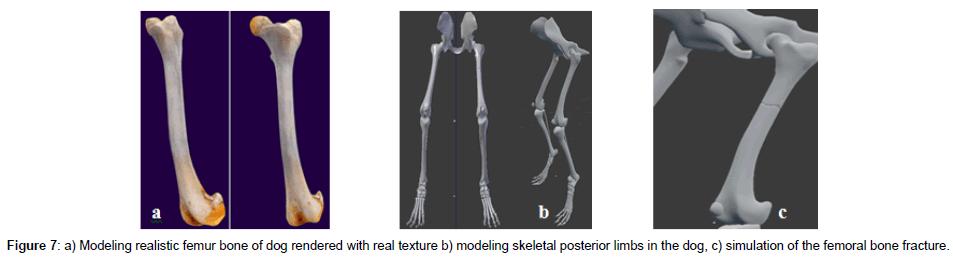 veterinary-science-technology-modeling-skeletal