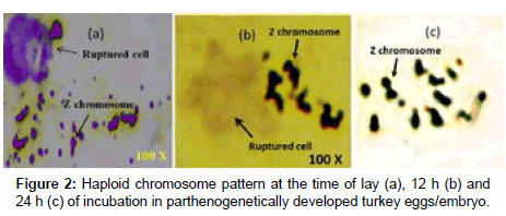 Difference in Chromosomal Pattern and Relative Expression of