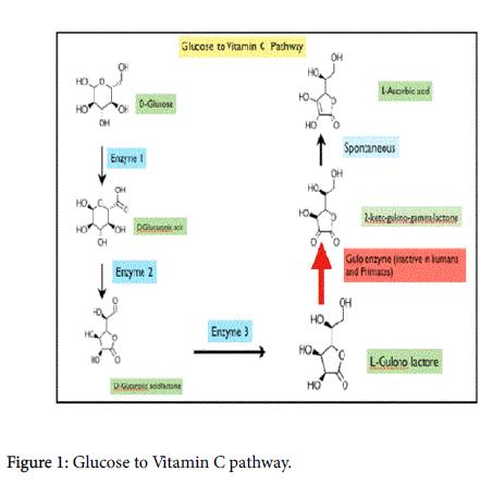 vitamins-minerals-Glucose-Vitamin