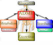 ADME Studies