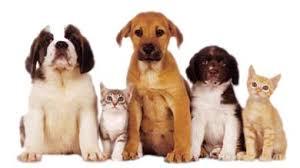 Animal Pathology & Immunology