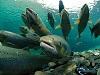 Best Aquaculture Practices