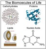 Biochemical Molecules