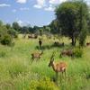 Biodiversity & ecosystem
