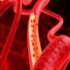 Biology of Circulatory System