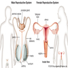 Biology of Reproductive System