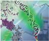BioMolecular Chemistry