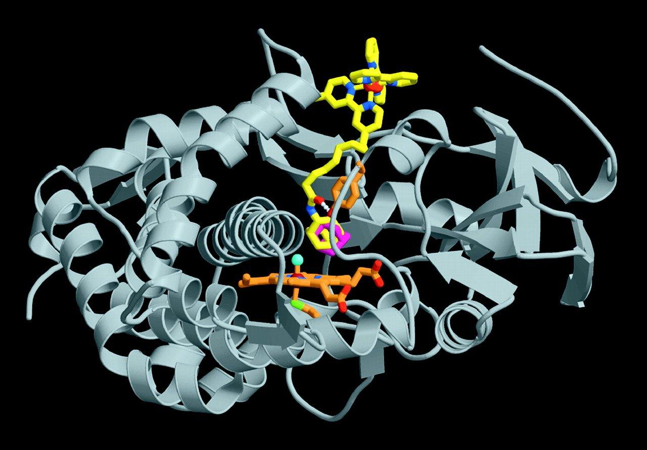 Cytochrome 450 Drug Metabolism