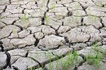 Drought Tolerence