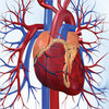 Endothelial Dysfunction Atherosclerosis