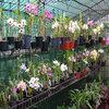 European Horticulture