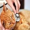 Feline Leukemia Complex