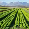 Field Crops Research