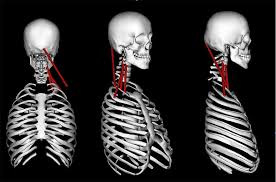 Forensic Injury Biomechanics