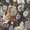 Fungal Ecology
