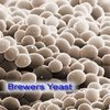 Fungal Enzymes and Applications