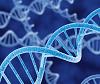 Gene cloning (DNA cloning)