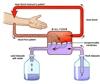Kidney Dialysis Treatment