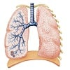 Lung Diseases