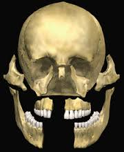 Maxillofacial Pathology