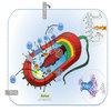 Microbial Biofuels