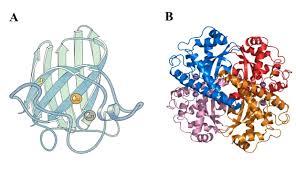 Oxidative Stress Biomarkers