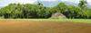 Semiarid Ecosystem Soil Properties