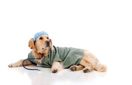 Veterinary Clinical Practices