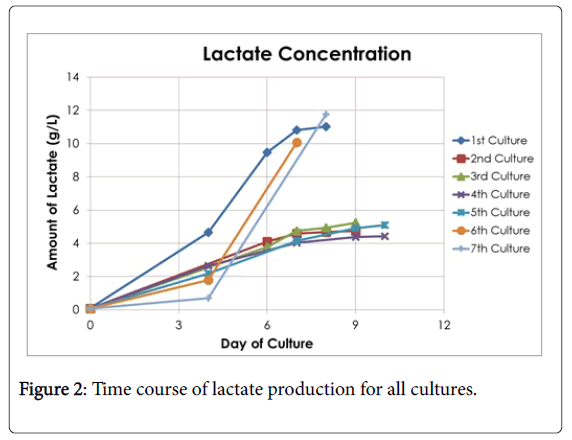 Biological-Medical-Sciences-lactate-production