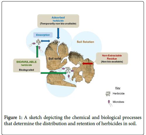 Bioremediation-Biodegradation-biological-processes