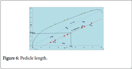 Crop-Science-Pedicle-length