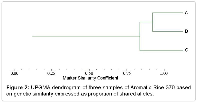 Evolutionary-Biology-UPGMA-dendrogram-three-samples