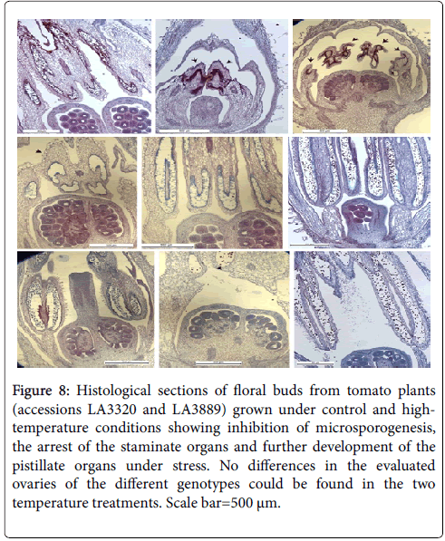 advances-crop-science-technology-Histological-structure