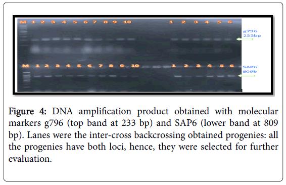advances-crop-science-technology-amplification-product