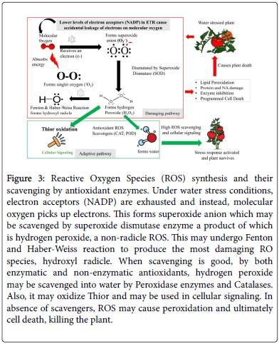 advances-crop-science-technology-superoxide