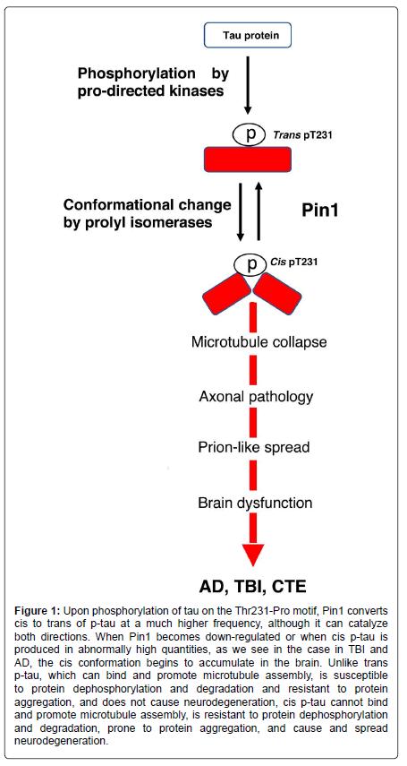 alzheimers-disease-parkinsonism-Pin1-converts