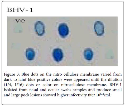 antivirals-antiretrovirals-cellulose-membrane