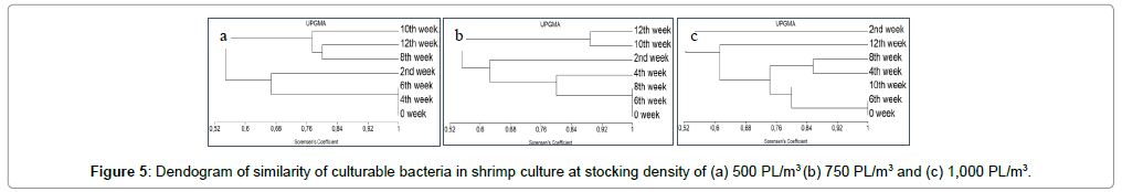 aquaculture-research-development-shrimp