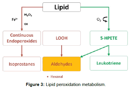bioanalysis-biomedicine-Lipid-peroxidation-metabolism