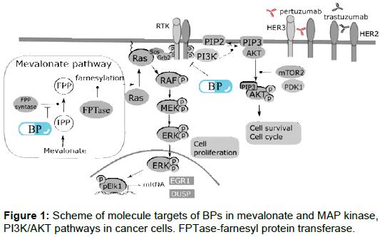 bioanalysis-biomedicine-pathways-cancer-cells