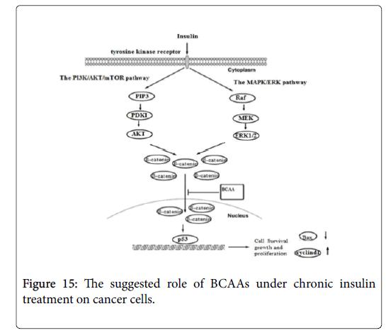 biochemistry-cell-biology-cancer-cells