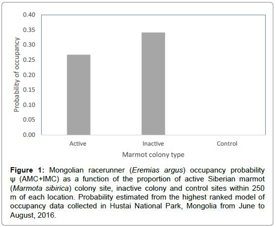 biodiversity-endangered-Mongolian-racerunner