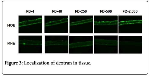 biology-and-medicine-dextran