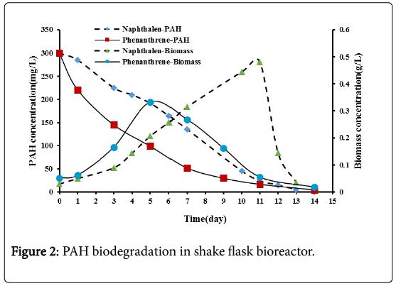 bioremediation-biodegradation-PAH-biodegradation