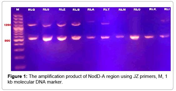 bioremediation-biodegradation-molecular-DNA